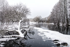 Winter landscape with river in forest Stock Images