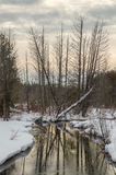 Winter landscape of river, trees, snow and reflections Stock Photos