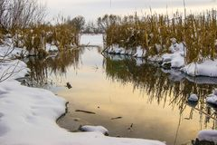 winter landscape: a river in which the reeds are displayed, sunrise or sunset_ stock photos
