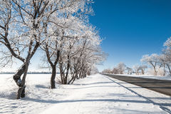 Winter landscape with road. And snow-covered trees Royalty Free Stock Image