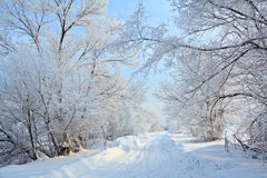 Winter landscape with road. Royalty Free Stock Images