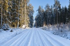 Winter landscape, road in forest in a winter. Stock Image