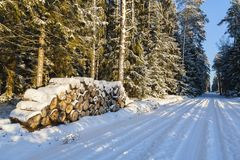 Winter landscape, road in forest in a winter. Stock Images