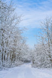 Winter landscape with the road and the forest Royalty Free Stock Image