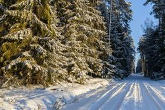 Winter landscape, road in forest in a winter. Royalty Free Stock Photos