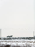 Winter landscape with road and horse Royalty Free Stock Photos