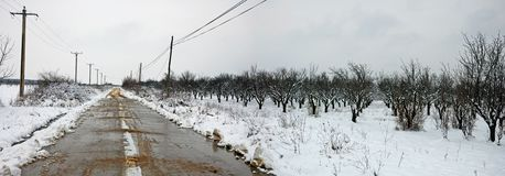 Winter landscape with road near orchard Royalty Free Stock Images