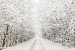 Winter landscape with road surrounded by trees Stock Images