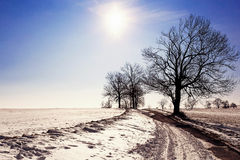 Winter landscape with road and trees, blue sky and sun Royalty Free Stock Photos