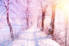 Winter landscape. Winter road and trees covered with snow. Sky and sunlight through the frozen tree branches. Copy space. Soft. Focus royalty free stock photography