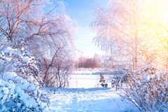 Winter landscape. Winter road and trees covered with snow. Sky and sunlight through the frozen tree branches. Copy space. Soft. Focus stock images