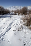 Winter landscape Rocky Mountains in Utah with animal tracks in t Stock Photo