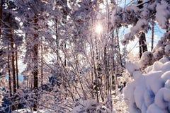 Winter landscape in Rodopi mountain, Bulgaria Royalty Free Stock Photos