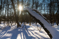 Winter landscape at Rotes Moor Royalty Free Stock Photography