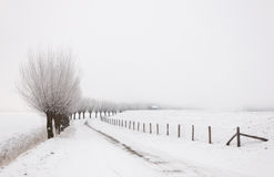Winter landscape with a row of pollard willows. Row of pollard willows. It is very early in the morning and it freezes very much in the Netherlands. The morning Stock Image