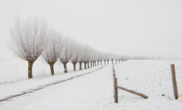 Winter landscape with a row of pollard willows Royalty Free Stock Images