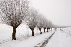 Winter landscape with a row of pollard willows Stock Photos
