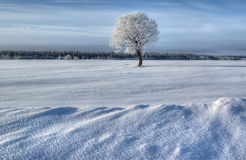 Winter landscape, Russia stock photography