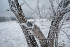 Winter landscape in Russia Stock Image