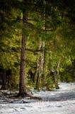 Winter landscape in Russia (Kaluga region). Stock Image