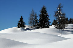 Winter Landscape at San Pellegrino pass, Dolomites, Italy. Royalty Free Stock Photo