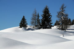 Winter Landscape at San Pellegrino pass, Dolomites, Italy. Royalty Free Stock Images