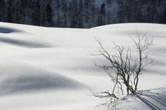 Winter Landscape at San Pellegrino pass, Dolomites, Italy. Royalty Free Stock Photography