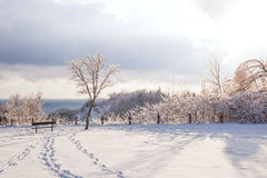 Winter landscape of Scarborough Bluffs Stock Image