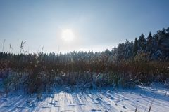 Winter landscape scene background with snow covered trees, ice lake and reeds. Beauty sunny winter backdrop. Frosty trees and reed royalty free stock photography