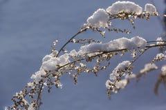 Winter landscape. Winter scene. Frozenned flower stock images