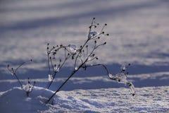 Winter landscape. Winter scene. Frozenned flower stock photo