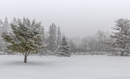 Winter Landscape Scene with Heavy Snow. Snowy landscape with trees in the background. Northern winter storm stock photo