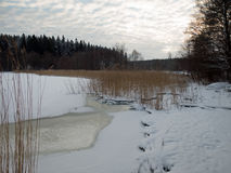 Winter landscape. Winter scene by a lake shore in Sweden Royalty Free Stock Image