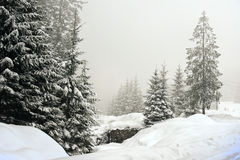 Winter landscape scenery with flat county and woods. Winter landscape foggy scene with Christmas trees forest Royalty Free Stock Photo