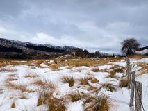 Winter landscape in Scotland Royalty Free Stock Images