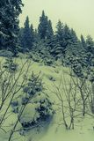 Winter landscape. Season, frost. Beautiful mysterious winter landscape in the forest royalty free stock image