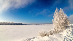 Winter landscape on the shore of a frozen lake with a tree in frost, Russia, Ural Stock Photography