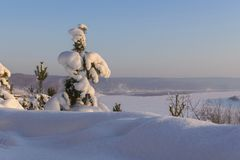 Winter landscape in Siberia royalty free stock photos