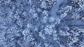 Winter landscape in Siberia stock video footage