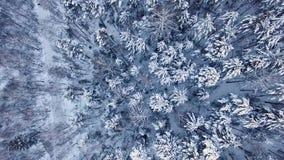 Winter landscape in Siberia stock video