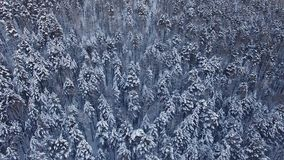 Winter landscape in Siberia stock footage