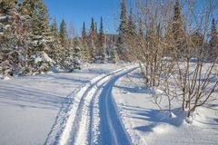Winter landscape with a ski road between the snowdrifts in the forest. Wild nature. Winter landscape with a ski road between the snowdrifts in the forest Stock Photo