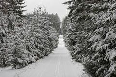 Winter landscape, ski track in forest Royalty Free Stock Photo