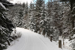 Winter landscape, ski track in forest Stock Photography