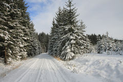 Winter landscape, ski track in forest Royalty Free Stock Photography