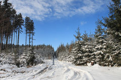 Winter landscape, ski track in forest Royalty Free Stock Images