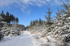 Winter landscape, ski track in forest Stock Image