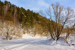 Winter landscape. Ski track in the snow. Island on a frozen river. Trees in the snow. stock photography