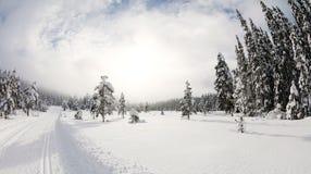 Winter landscape. With ski tracks stock photo