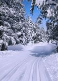 Ski trail in winter forest. Royalty Free Stock Photography
